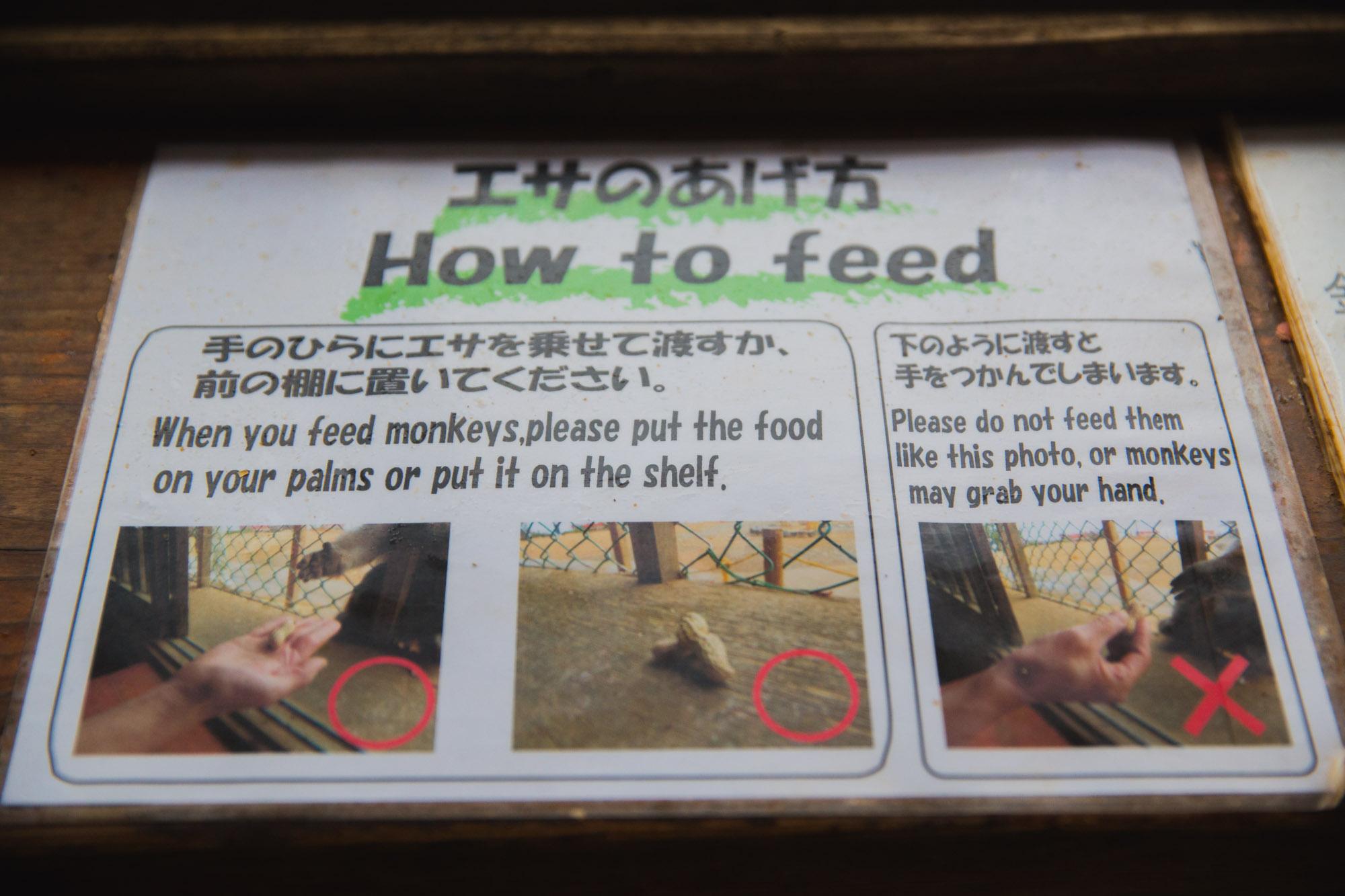 monkey_park_frankie-15