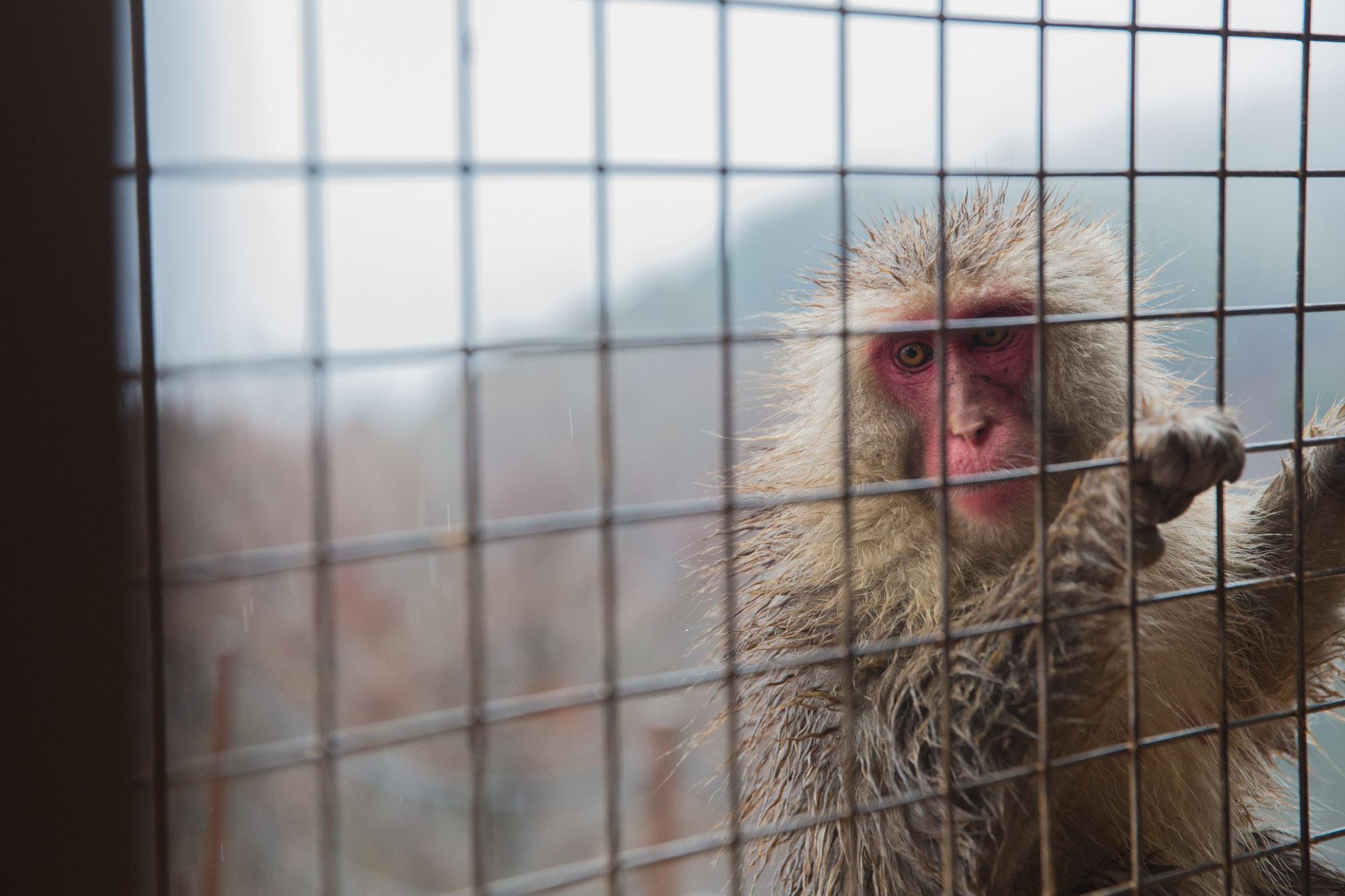 monkey_park_frankie-8