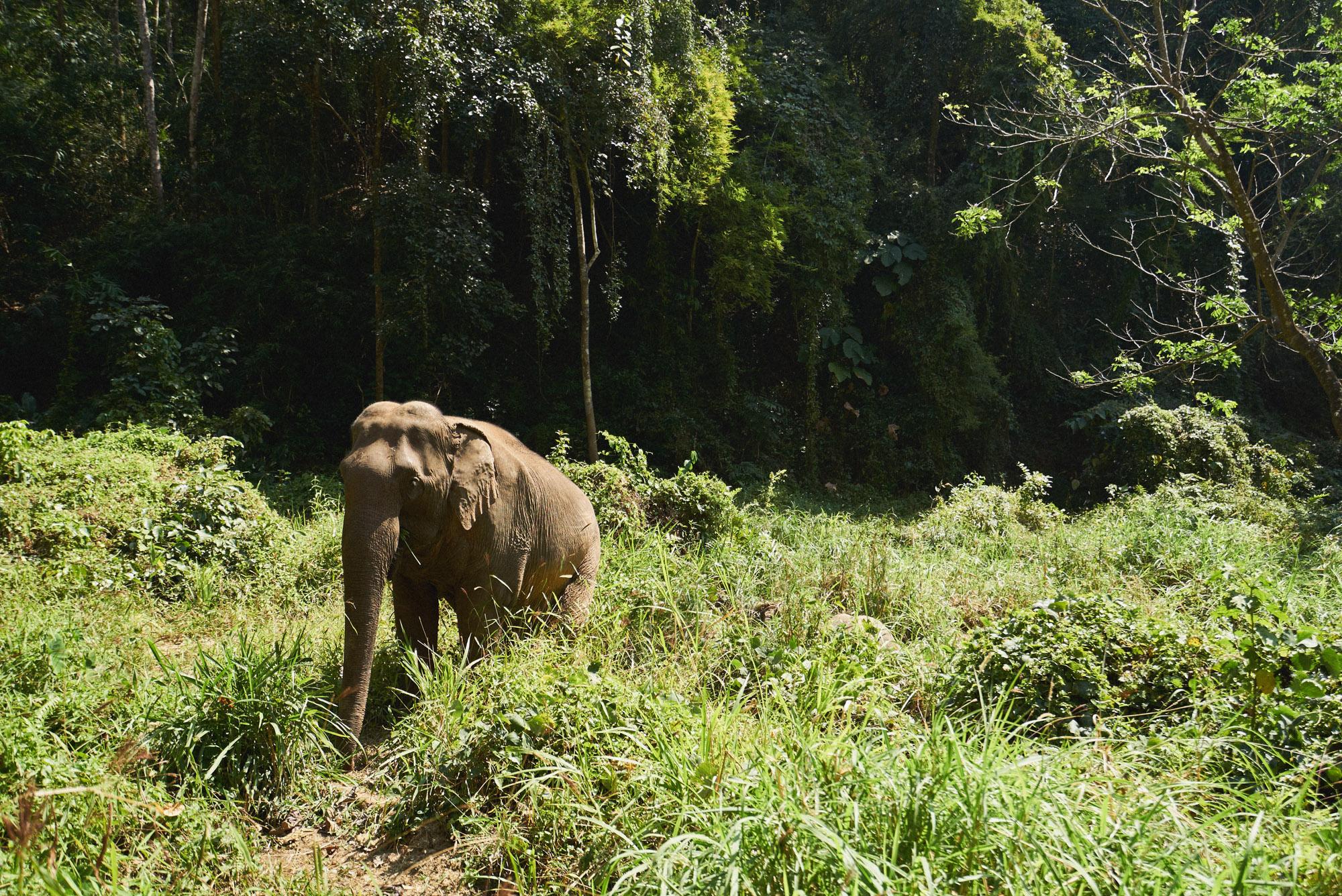 wesley_elephant_park_thailand-23