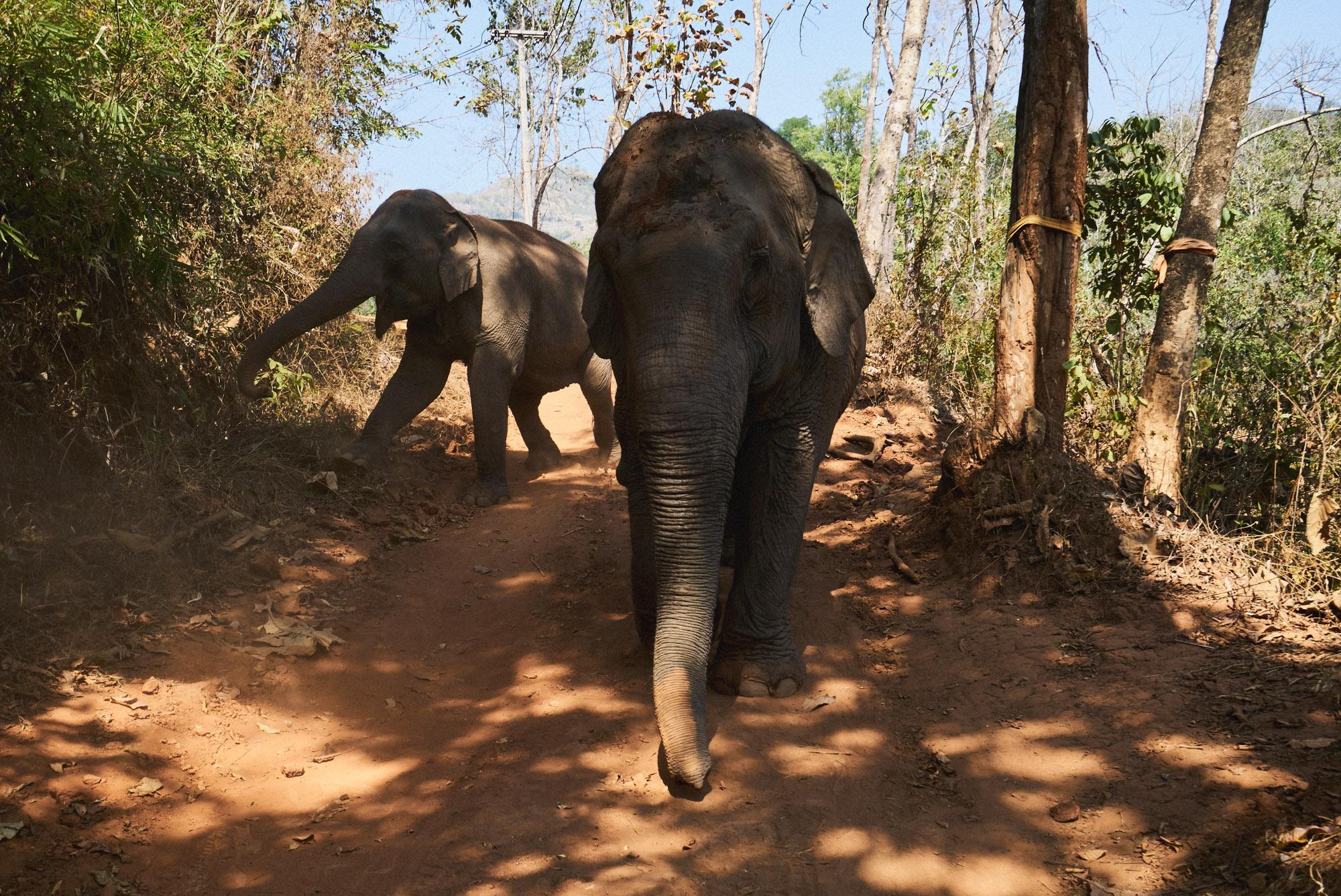 wesley_elephant_park_thailand-26