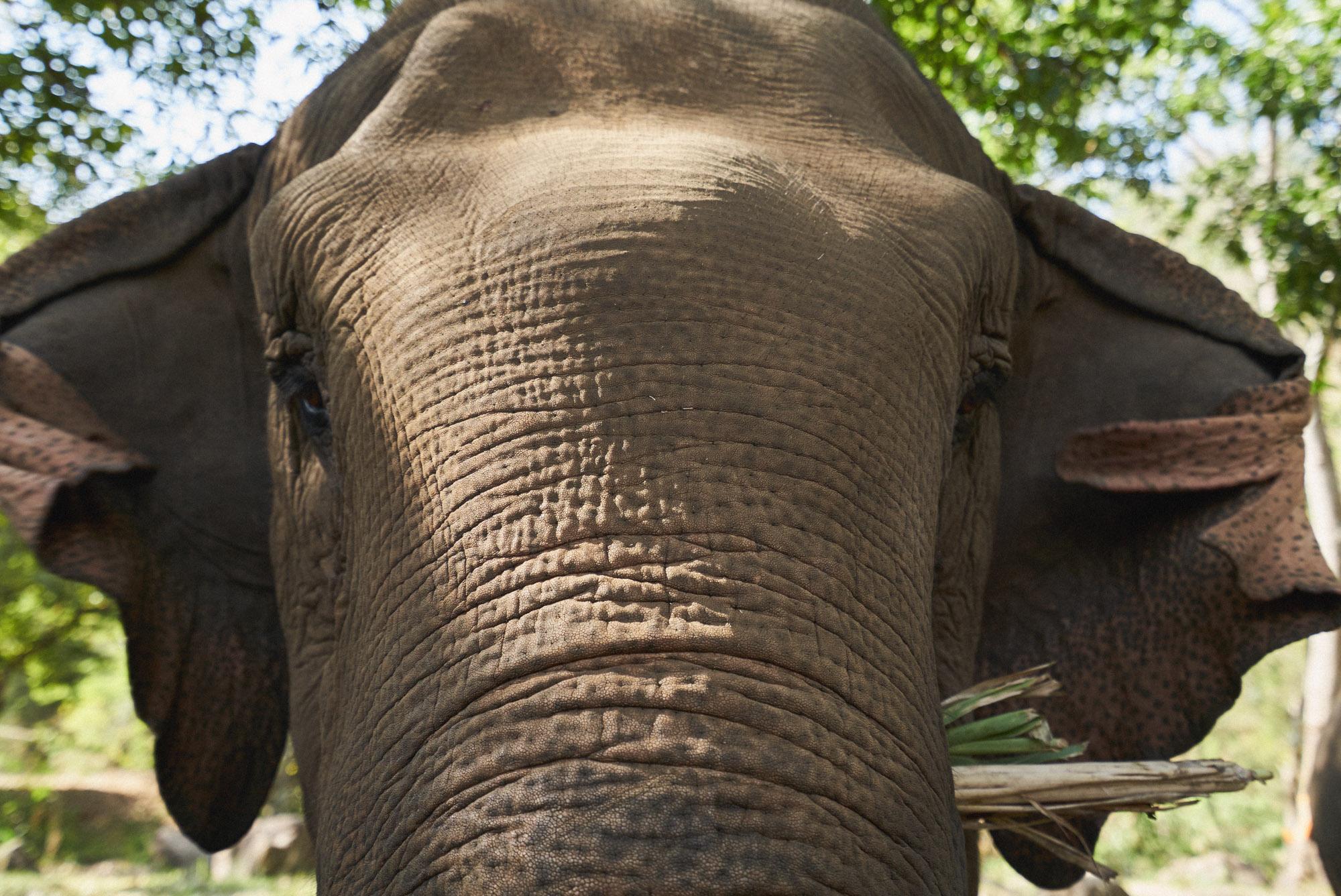 wesley_elephant_park_thailand-9